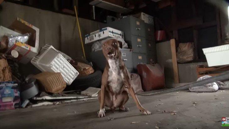 レスキューに激しく抵抗する犬の本当の顔は、理想的な家庭犬でした