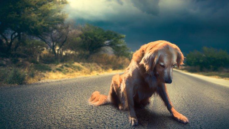 犬も悲しいと泣くの?犬が涙を流す理由