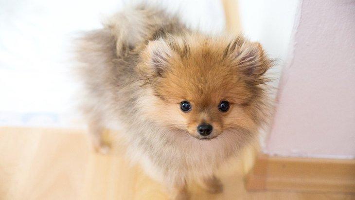 犬の『表情』からわかる心理6つ!実はこんなにも表情豊かだった!