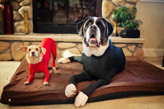抜け毛&防寒対策に犬用レオタードが発売!収益金の一部は寄付へ