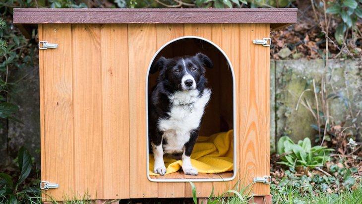 なぜ犬は「外飼い」が主流だったの?