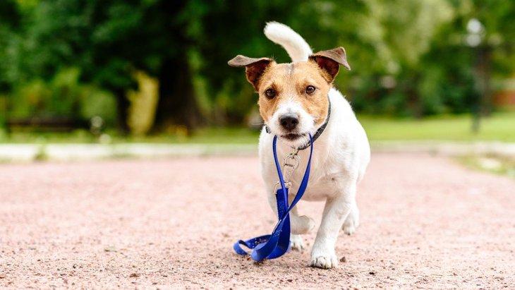 こんな行動をしていたら要注意?犬が飼い主を軽蔑している時の行動や仕草5つ
