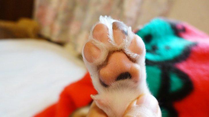 犬に『肉球クリーム』を舐めさせない方法