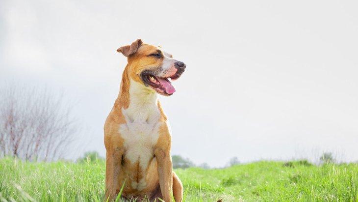 犬との『信頼関係』を築く方法は?3つのコツとNG行為を解説