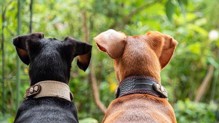 犬の多頭飼いって実際どうなの?大変?考えられるメリット・デメリット
