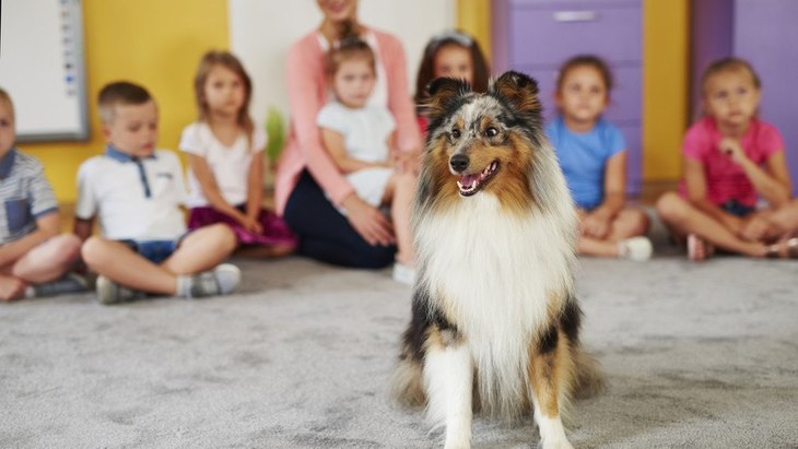 子供が多い場所に犬を連れて行く時の注意点3つ