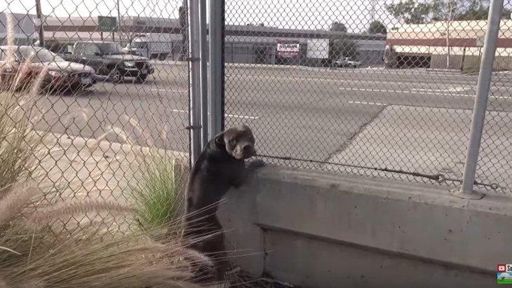 すぐ横は高速道路…ヒヤヒヤの保護活動と、興味深い犬の心理