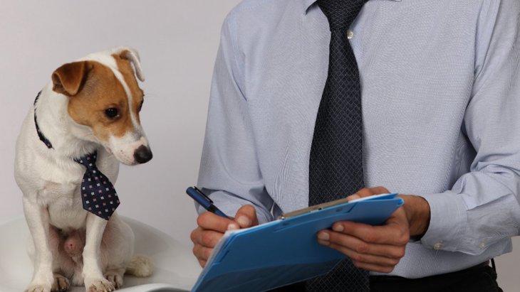 政治家の愛犬は当選の助けになるか?アメリカで研究がスタート