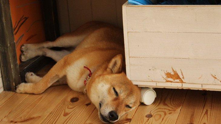 犬が狭いところを好む理由!なぜ隙間に入りたがるの?