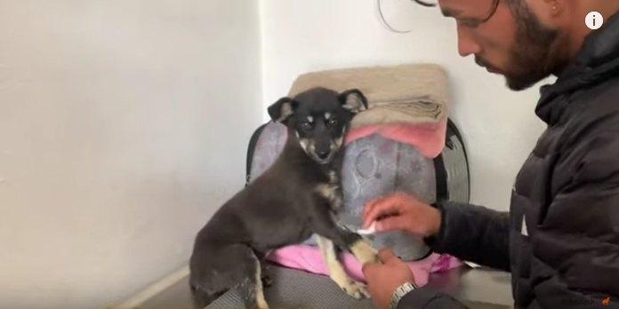 交通事故で傷を負った子犬を発見…この小さな命を救いたい!Part2