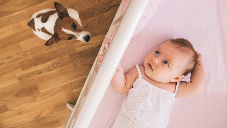 犬と赤ちゃん(人間のこども)の生活のポイント