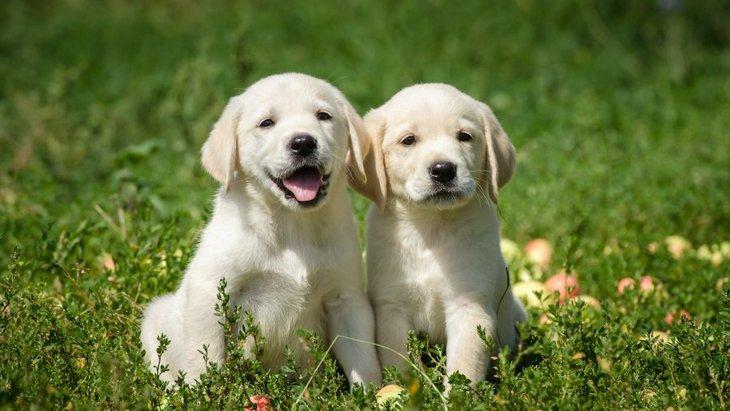 犬にとって「子犬期」の過ごし方が重要と言われる理由とは?