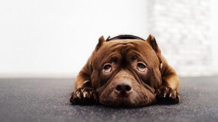 犬が人のことを嫌いになってしまう『絶対NG行為』5選
