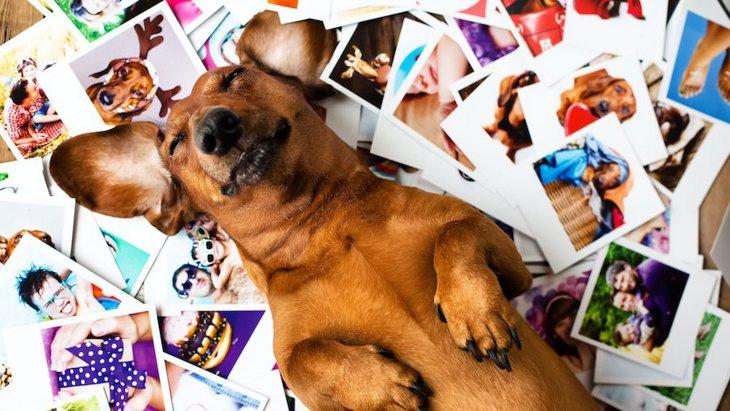 犬は過去に会った人の顔を覚えているの?飼い主でも忘れられることはある?