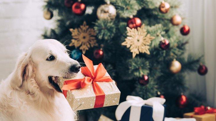 犬が喜んでくれる『クリスマスプレゼント』5選