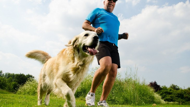 イギリスでの調査から、肥満のリスクの高い犬種とは?