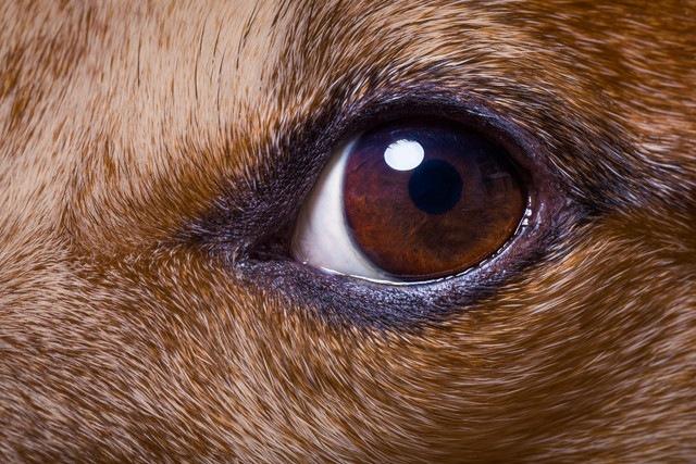 犬は暗い場所でもハッキリ見えてる?人間と犬の「目」の違い