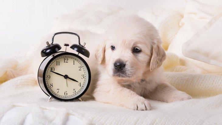一人暮らしで犬を飼う時の心構え5つ