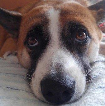 引き取った保護犬は臆病な犬。引取後は家が大好きな人を癒すセラピー犬に!