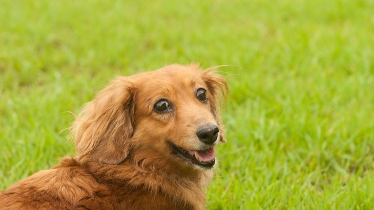 長生きする犬の共通点5つ