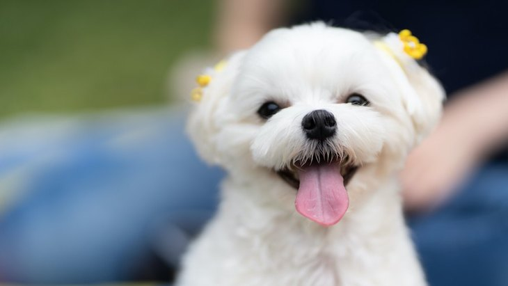 犬の『笑顔』には意味がある?本当は何を考えているの?