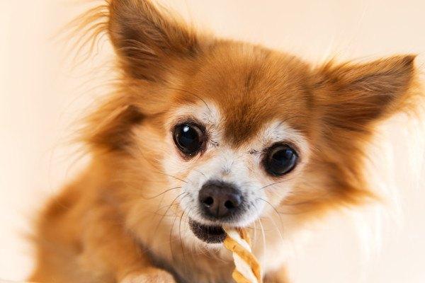 犬の歯磨きガムおすすめ人気ランキング!選び方から期待できる効果まで