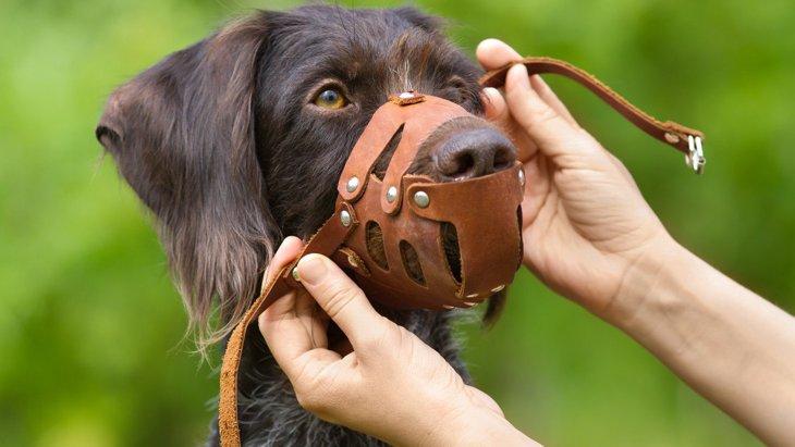 犬の危険な『咬みつきレベル』とは?大きなトラブルになる前に対策を!