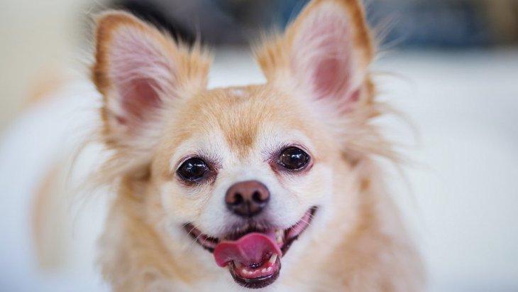 犬の血液型で多い種類は何?調べ方や検査方法、他のペットとの違い