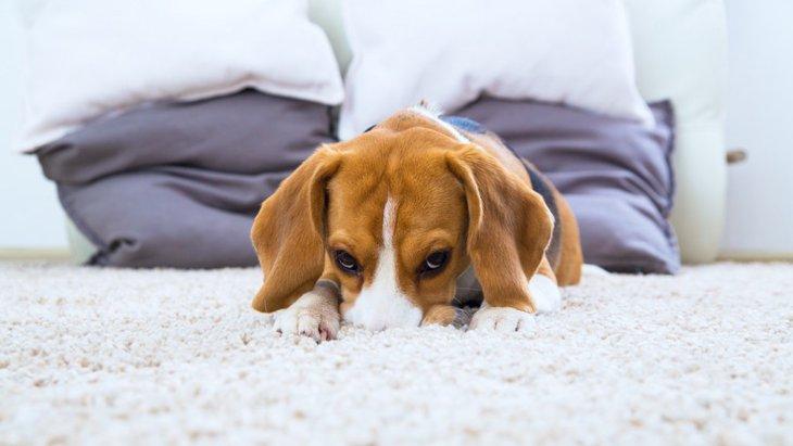犬の食欲がない…そんな時にやりたい3つの工夫