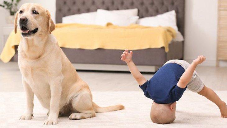 犬が絶対に好きになれない人の特徴3つ
