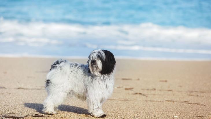 絶滅寸前の犬種5選!希少になった理由や特徴を解説