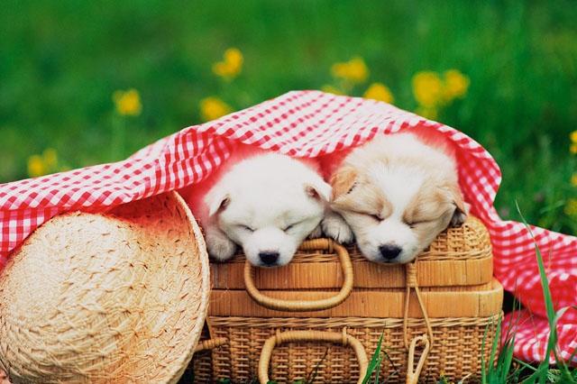 犬のキャリーバッグの選び方から活用法まで
