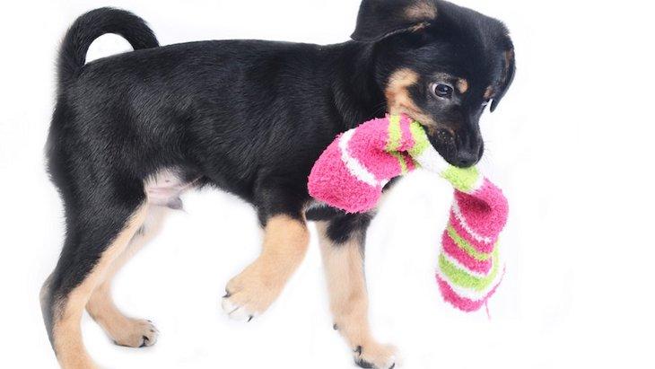 簡単リメイク!犬の洋服を靴下から作る方法