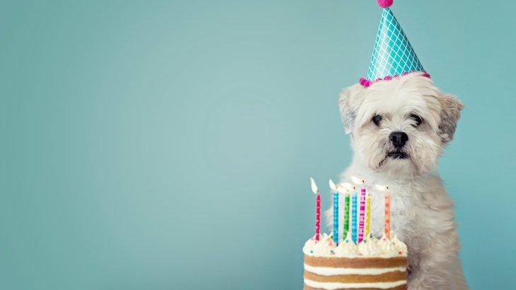 犬の誕生日にできるお祝いプラン6選