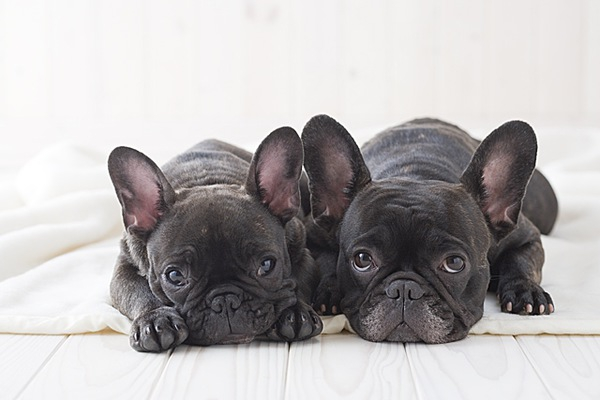 子犬の下痢 原因と対処法