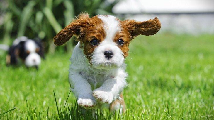 活用したい犬のためのサービス3選