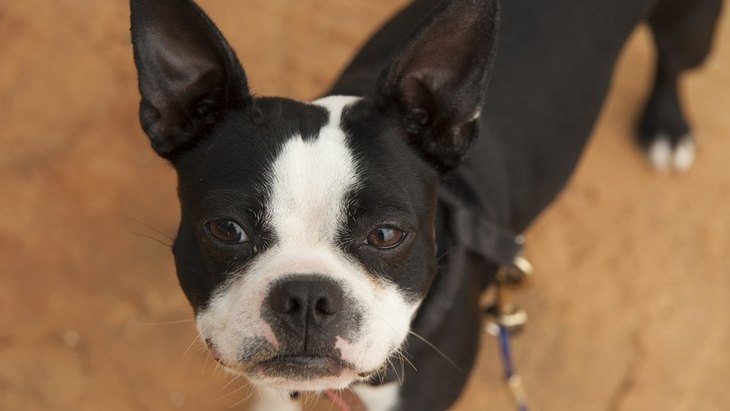 じーっ…犬が『飼い主を怪しんでいる』時にする仕草や態度5選