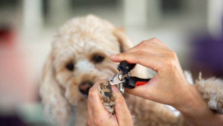 犬の爪切りを自分でやるのが怖い…病院でやってもらうメリット3つ
