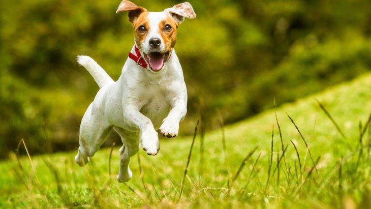 犬が見せる『幸せな時』にする仕草や行動5選♡
