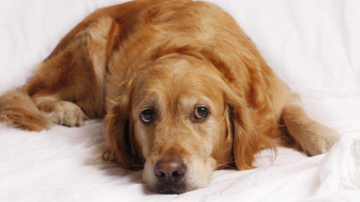犬が『うざい』と思っている飼い主の行為5つ