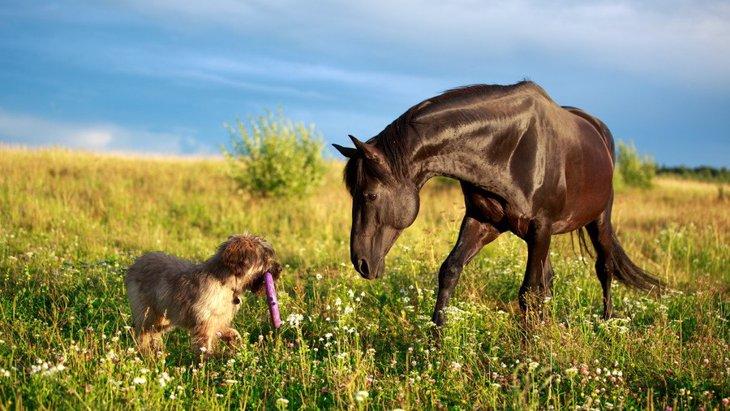 種を超えた友情、犬と馬が遊ぶことについての研究