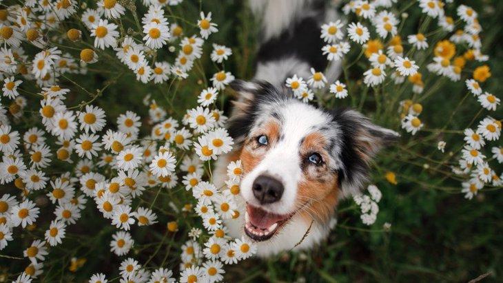 犬は人のことをどう認識しているの?飼い主と他人の違いは?