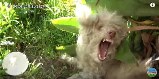 人を恐れて咬もうとする犬の保護には、昔話の語り聞かせでリラックス!?