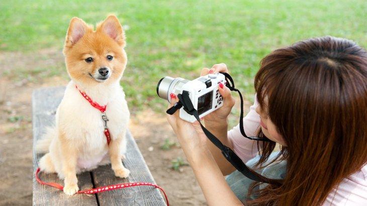 犬は「撮影」を理解してる?どうやったらうまく撮影できるの?