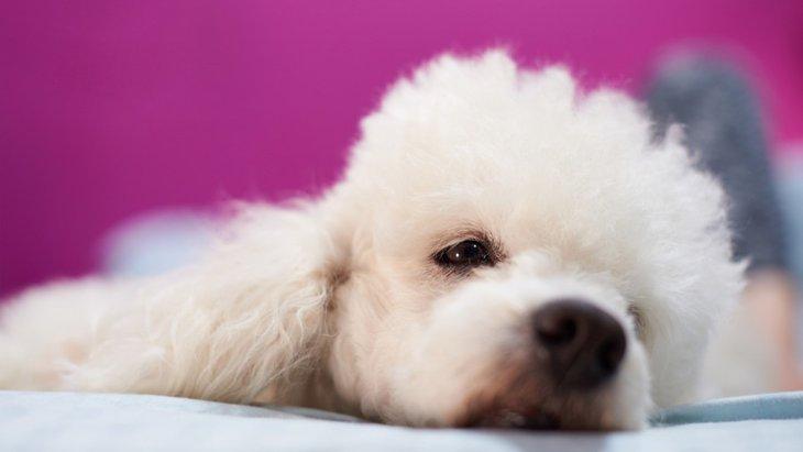 愛犬が急に甘えん坊になるのは「病気」が原因かも?