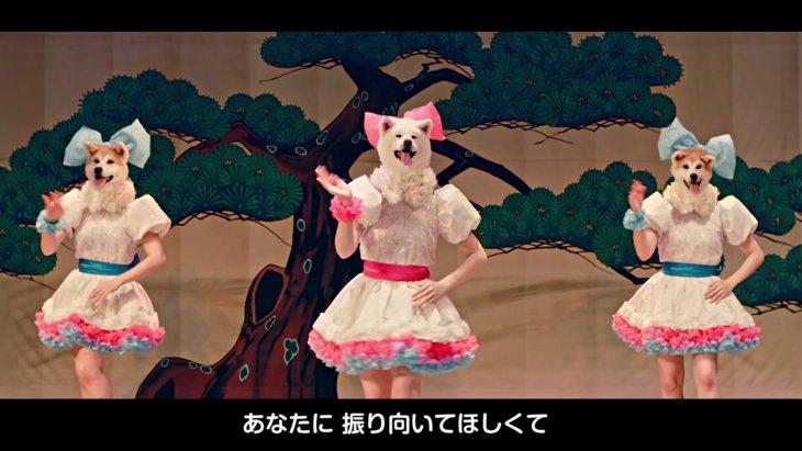 秋田犬アイドル「MOFUMOFU☆DOGS」とは?衝撃のビジュアルとクオリティに世界が興奮