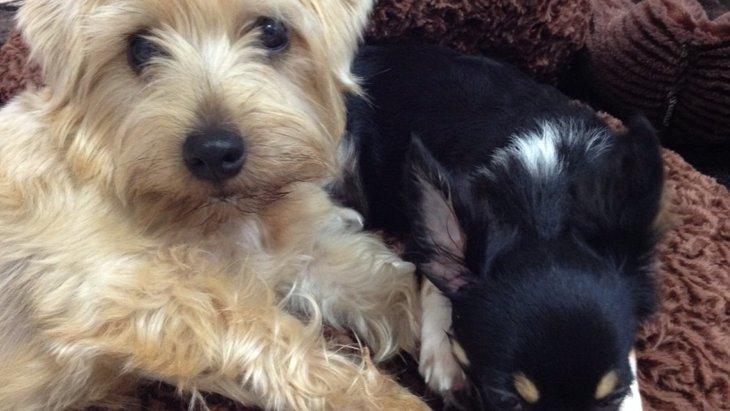 迎え入れることができなかった保護犬と我が家の家族になった保護犬