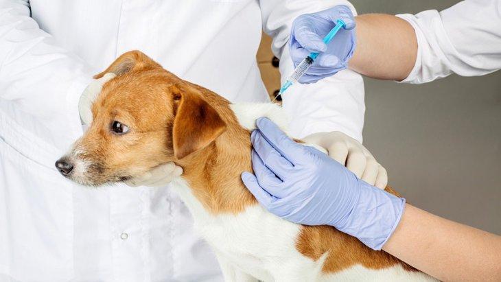 犬にワクチン接種が必要な理由
