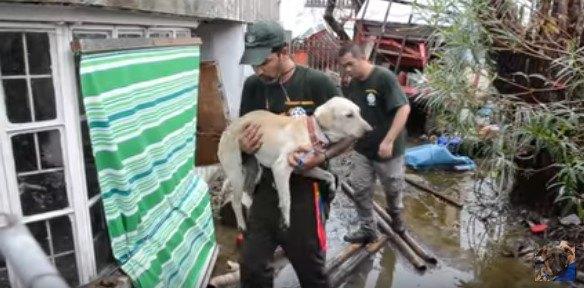 台風が町を破壊。犬たちの救助活動は、社会の再生にもつながっている