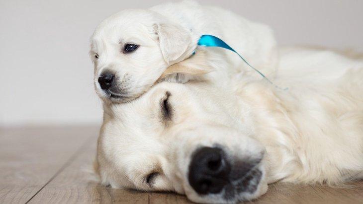 犬に赤ちゃんが生まれたら!飼い主ができる5つの産後ケア